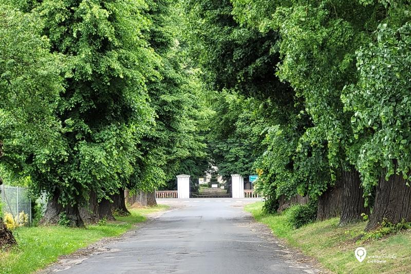 Margońska Wieś, pomnik przyrody, pomnikowa aleja drzew, najdłuższa aleja drzew, ciekawe miejsca w wielkopolsce, wielkopolska atrakcje, na weekend