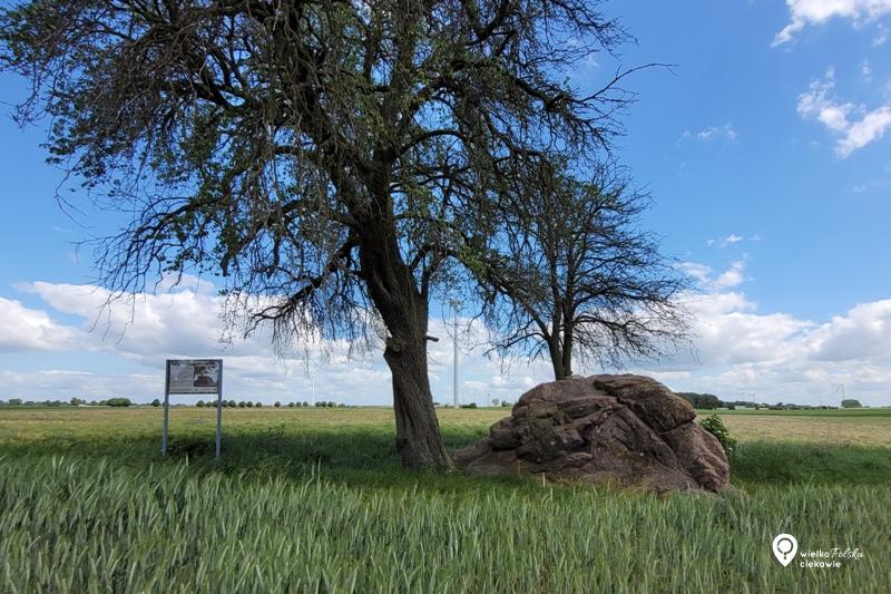 Margońska Wieś, głaz narzutowy, pomnik przyrody, zaklęta karczma, powiat chodzieski atrakcje, wielkopolska atrakcje, ciekawe miejsca w wielkopolsce