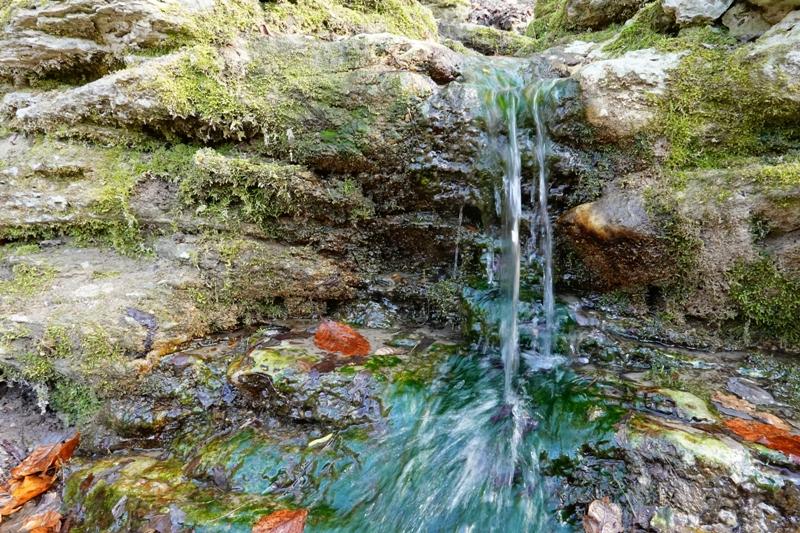 pomnik przyrody, wielkopolska, źródełko żarnowiec, wielkopolski park narodowy