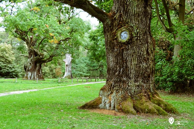 rogalin, park krajobrazowy, rogalińskie dęby, pomnik przyrody, wycieczki po wielkopolce, ciekawe miejsca w wielkopolsce