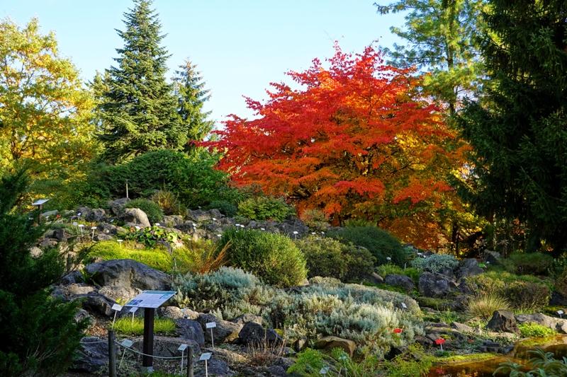 poznań, ogród botaniczny, poznań atrakcje, ciekawe miejsca w poznaniu, poznań na spacer